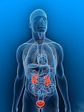 رادیولوژی رنگی سیستم ادراری